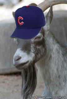 goat_cubs_hat.jpg